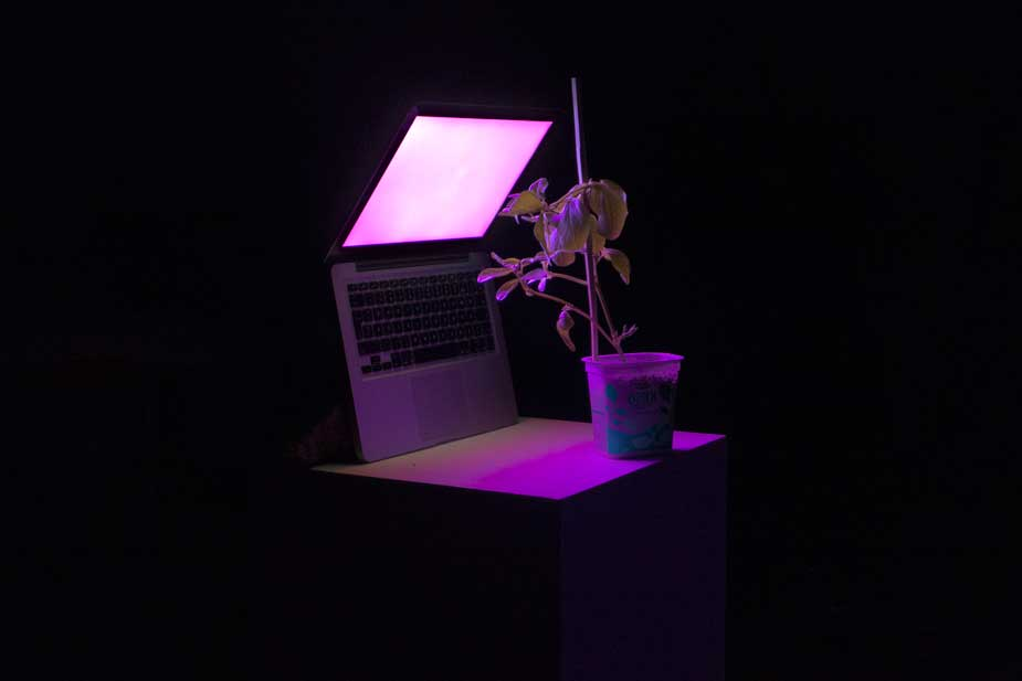 grow_light2.jpg